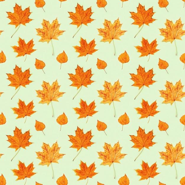 緑色の紙にカエデと白樺の美しい黄色の紅葉からのシームレスなパターン Premium写真