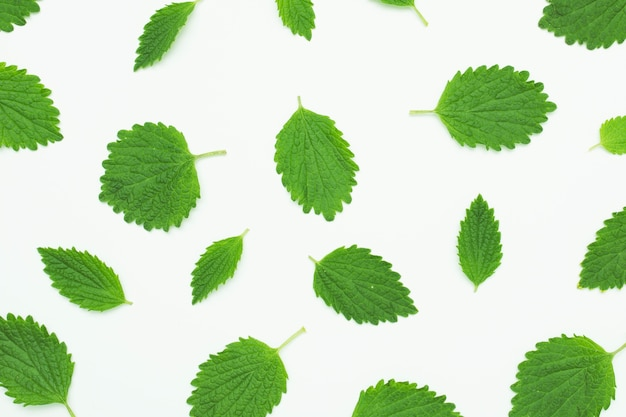 Seamless pattern with green fresh leaf on white background Premium Photo