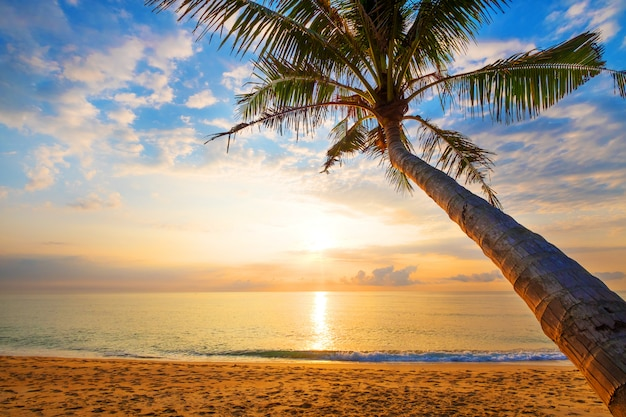 Seascape of beautiful tropical beach with palm tree at sunrise. Premium Photo