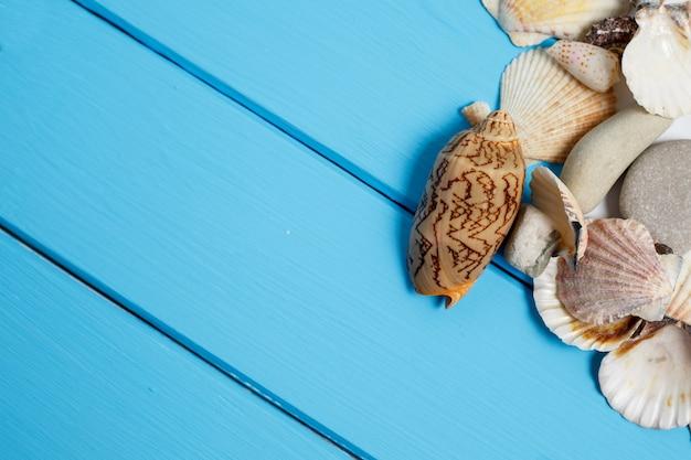 Морская ракушка на деревянном фоне Premium Фотографии