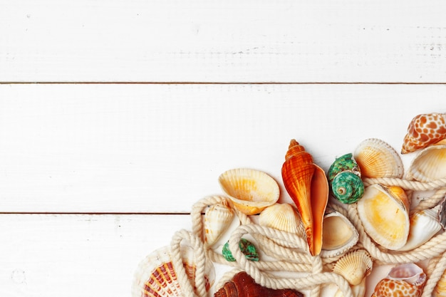 Seashells background Premium Photo