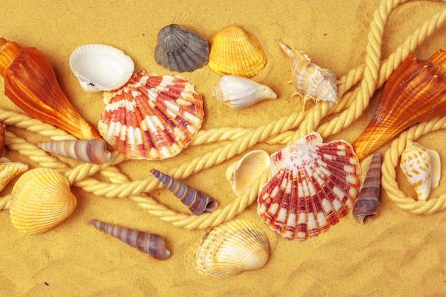 Seashells on sand. sea summer vacation background Premium Photo
