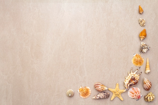 Seashells summer background. lots of different seashells piled together, , copy space, frame. Premium Photo