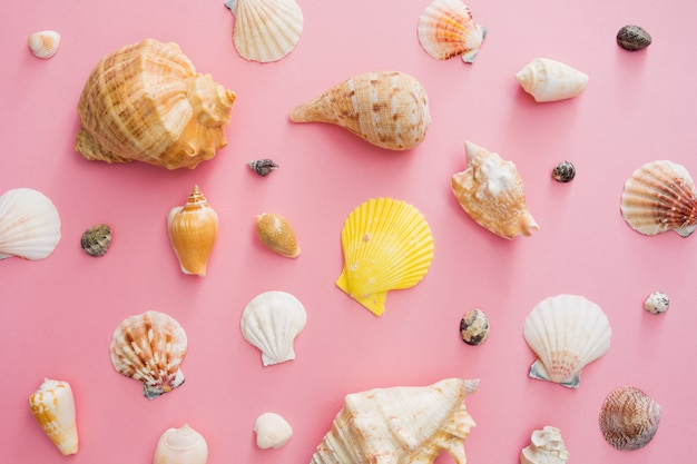 Seashells symbol of summer holiday on the beach on a pink background. Premium Photo