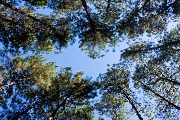 Season summer forest background blue Free Photo