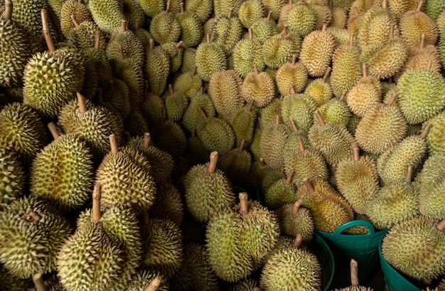 Seasonal durian is being sold to traders for export to china. Premium Photo