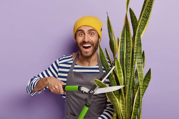 Potatura stagionale di piante da appartamento. giardiniere uomo con la barba lunga positivo detiene grandi tagliasiepi, coinvolti nella coltivazione delle piante Foto Gratuite