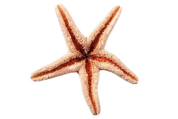 白い背景に隔離された星の魚seastar 無料写真