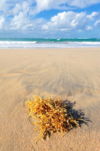 Водоросли на карибском пляже летом Бесплатные Фотографии