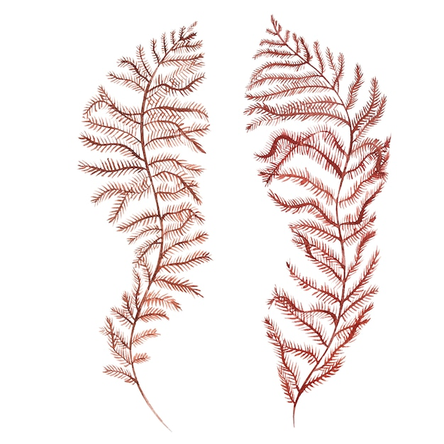 Seaweed sea life object isolated on white background. watercolor hand drawn painted illustration. Premium Photo