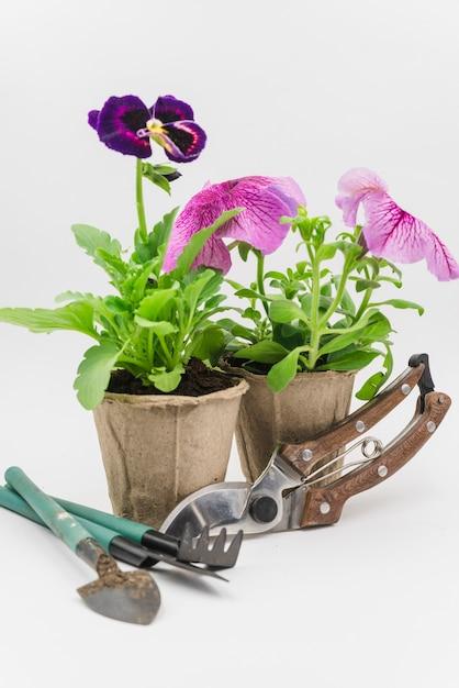 ミニガーデニングツール。ペチュニアとパンジーの花植物白い背景の上のsecateurs 無料写真