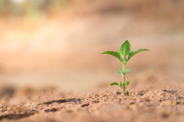 The seedling are growing in the soil Premium Photo