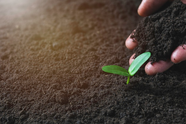 Seedling concept by human hand with young tree Premium Photo