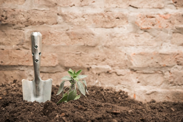 Seedling and hand shovel into soil Free Photo
