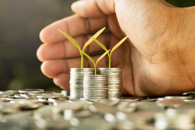 The seedlings are growing on coins. Premium Photo