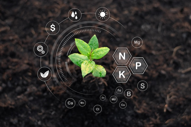 Seedlings are growing from fertile soil, environmental concepts. Premium Photo