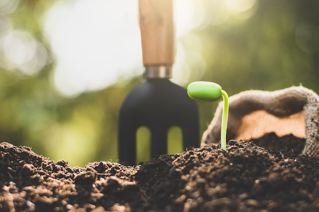 The seedlings are growing from the fertile soil. Premium Photo