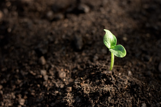 Seedlings are growing from fertile soil. Premium Photo