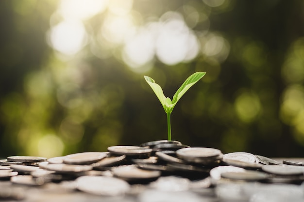 The seedlings are growing from the pile of coins. Premium Photo