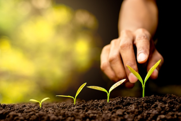 Seedlings are growing out of the soil Premium Photo