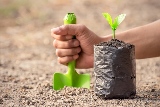 Seedlings are grown in the nursery bag. Premium Photo
