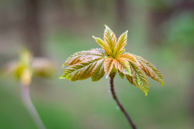 Seedlings planted near the forest with young leaves in spring. Premium Photo