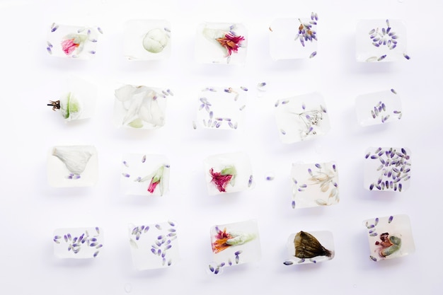 Seeds and flowers in cubes of ice Free Photo