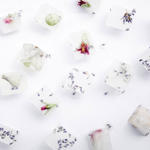 Seeds and flowers in ice cubes Free Photo