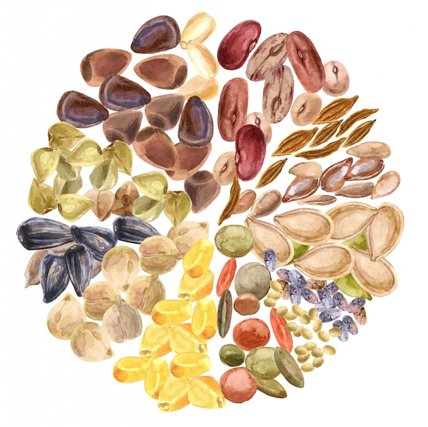 Seeds isolated. gluten-free product, healthy food, vegetable protein, vegetarian diet Premium Photo
