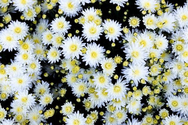 背景として多くのカラフルな花の選択 Premium写真