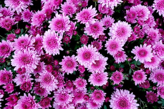 背景として多くの紫色の花の選択 Premium写真