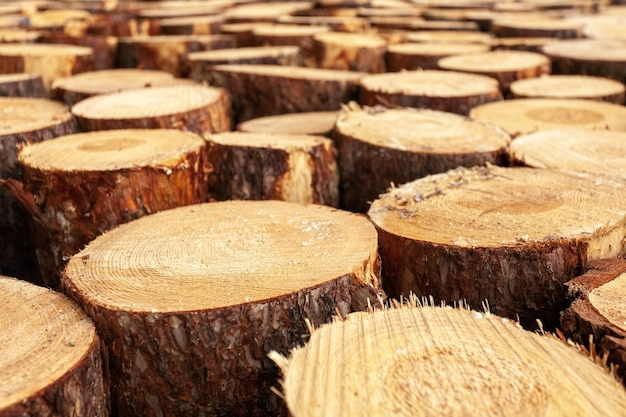 田舎の木の切り株の選択 無料写真