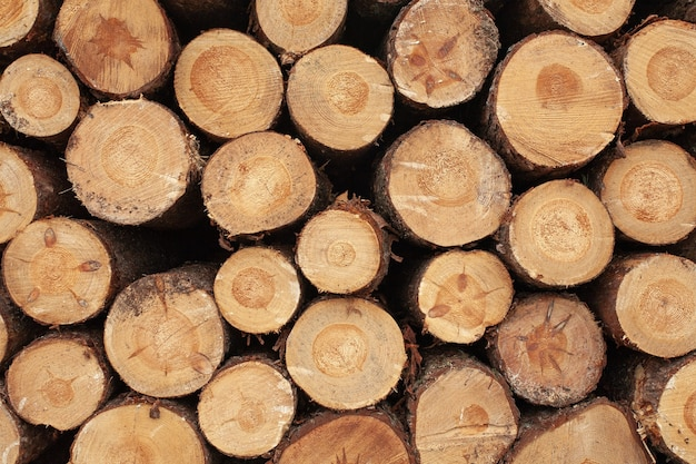 Selection of wooden stumps in the countryside Free Photo