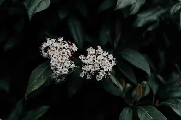 녹색 잎을 가진 아름 다운 하얀 꽃잎 꽃의 선택적 근접 촬영 초점 샷 무료 사진