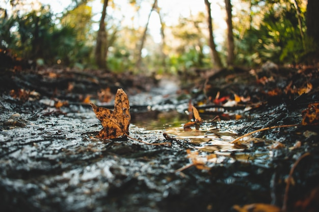 Selective closeup shot of fallen leaves covered in dirt on water puddles Free Photo