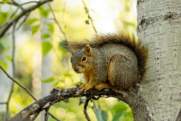 Селективный крупным планом выстрел из коричневой белки на ветке дерева Бесплатные Фотографии