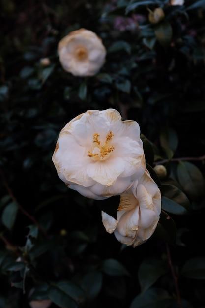 Селективный крупным планом выстрел из белого цветка с зелеными листьями Бесплатные Фотографии