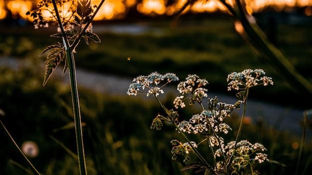 Selective focus closeup shot of beautiful greenery in a garden Free Photo
