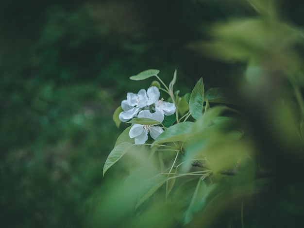 녹색 잎과 하얀 꽃의 선택적 초점 근접 촬영 샷 무료 사진