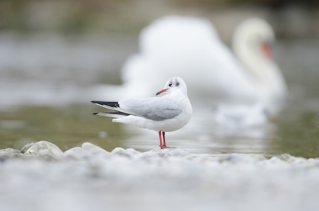Selective focus of a seagull standing on a rock near a water Free Photo