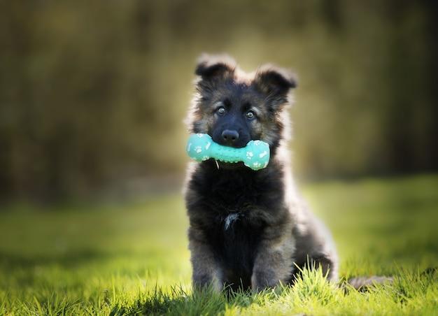 Colpo di messa a fuoco selettiva di un adorabile cucciolo di pastore tedesco con un giocattolo da masticare Foto Gratuite