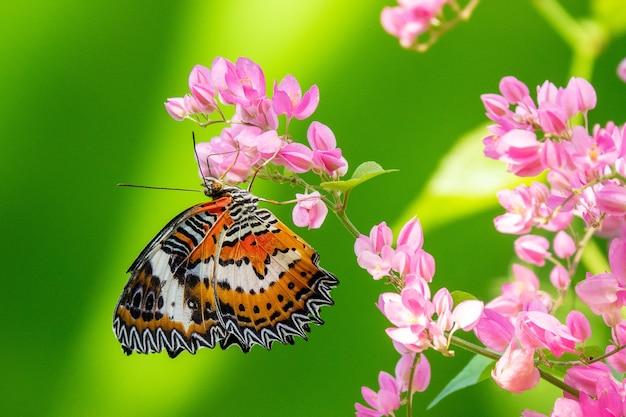 Colpo di messa a fuoco selettiva di una bellissima farfalla seduta su un ramo con piccoli fiori rosa Foto Gratuite