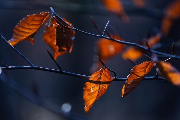Messa a fuoco selettiva colpo di foglie marroni su un ramo di un albero nel parco maksimir a zagabria, croazia Foto Gratuite