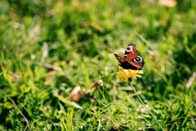 Colpo di messa a fuoco selettiva di una farfalla seduta su un fiore di campo in mezzo al campo Foto Gratuite