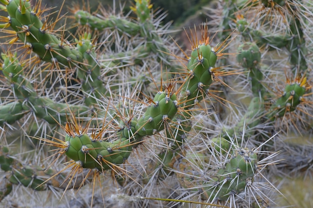 Selective focus shot of a cactus with big spikes Free Photo