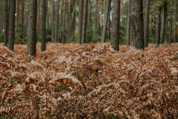 Selective focus shot of dry ostrich fern branches growing in a forest with tall trees Free Photo