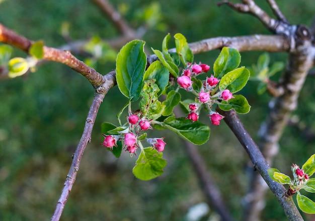 Colpo di fuoco selettivo di fiori rosa esotici su un albero nel mezzo di una foresta Foto Gratuite