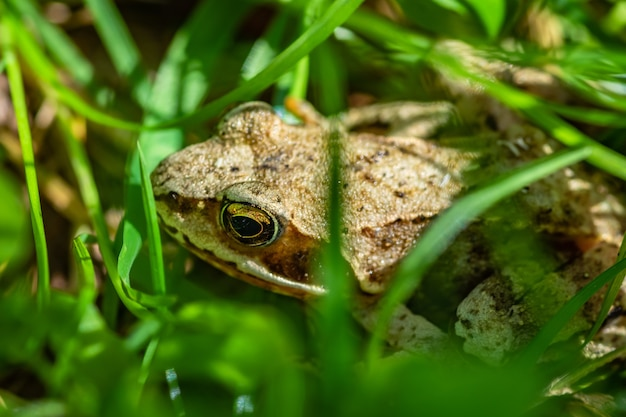 Selective focus shot of a frog in the middle of grass Free Photo