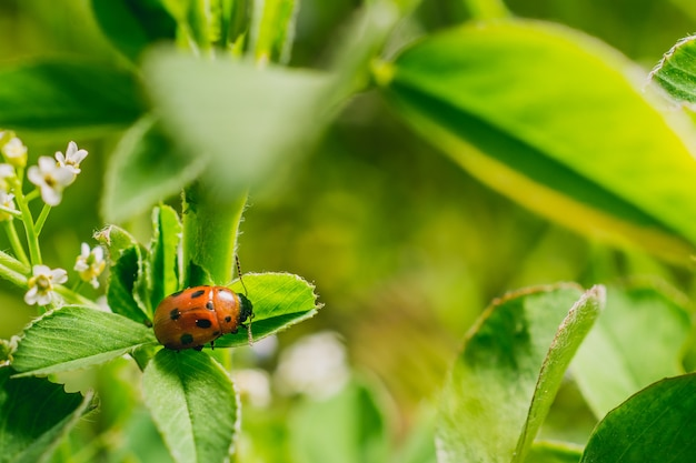 Selective focus shot of a ladybird beetle on a leaf in a field captured on a sunny day Free Photo
