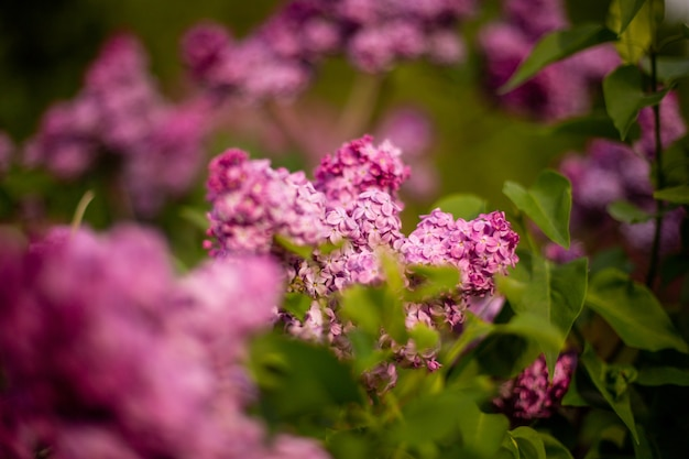 Selective focus shot of lilac flowers blooming in a field Free Photo